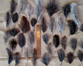 Ostrich Feathers - 30 small hen, 30 small rooster, 35 tiny hen, 35 tiny mix