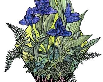 "Orchids &Ferns 8 1/2"" X 11"" Print"