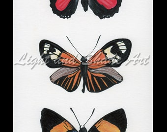 6x9in. - Butterflies - Ink & Colored Pencil Print
