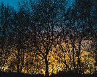 Sunset over the trees on munich , design art interior design
