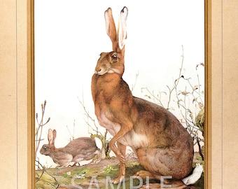 Hare Print by E J Detmold
