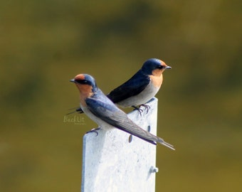The Welcome Brigade (Welcome Swallows)