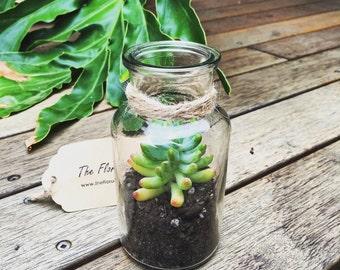 Vintage Style Mini Succulent Terrarium