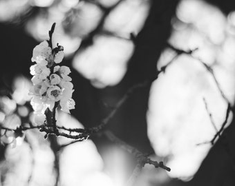 Blossom in Black & White