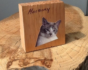 Pop art cat on wood