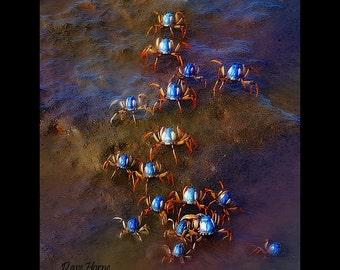 Solider Crabs
