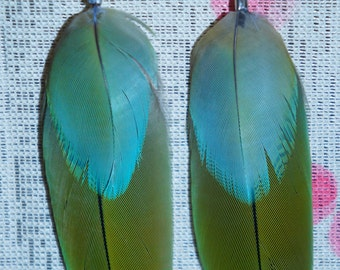 LG Macaw double feather earrings