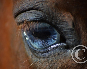 Equine Photography Horse Eye Photo Print