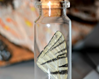 Magic Forest Butterfly Vial