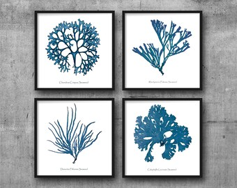 Coral Prints, Coral Print, Sea Coral Set Of 4, Nautical Wall Art, Seaweed Prints, Marine Art, Coral Art, Coral and Seaweed, Denim Blue, Navy