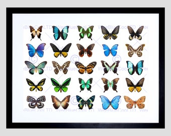 Animal Photo Composition Tropical Butterfly Collage Display Art Print FEMP5551B