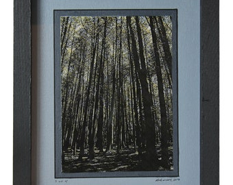 linear Forest (Nature Series) - Print 3