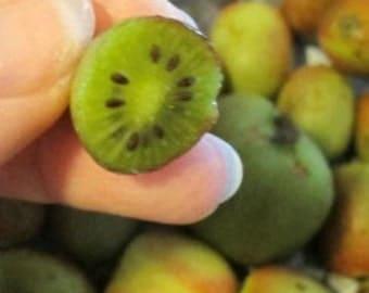 Hardy Kiwi Fruit 10 Seeds (Actinida Arguta) Miniature,Sweet Kiwi Fruits!Hardy