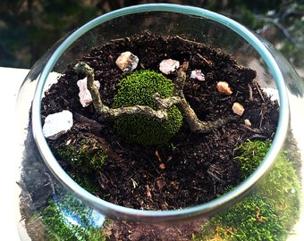 Medium Orb Moss Terrarium