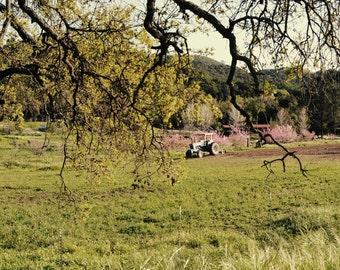 Farm in Wine Country Art - 16x20