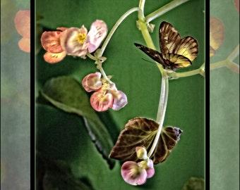 Flower Butterfly Painting Art, Flower Original Painting, Butterfly Painting, Flower Art, Butterfly Art, Wall Art, Housewarming Gift