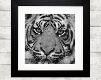 Printable art tiger - printable tiger - animals art work - nursery printable - instant download - Animal Print Nursery - wall print tiger