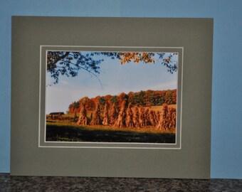Double Framed 5x7 Photo - Corn Stalks