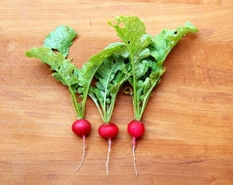 Three Radishes on a Wooden Board Photograph Print