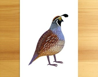 California Quail State Bird 5x7 Print