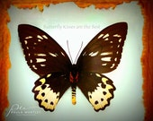 butterfly kisses art, butterfly kisses print, mint wall art, mint green, butterfly art, butterfly art print, girls room decor, nursery deco