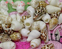 Trim Seashells Bead Natural Sea Shell Real Conch 100 Drill Piece Mix Lot Tiny Small Mini Assorted Color Mixed Collection Handmade Craft Pack