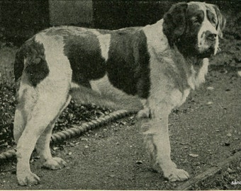 1898 Vintage Dogs St Bernard Newfoundland Black and White Photo Print