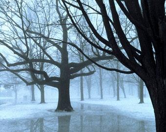 High Park Blues IV - 5x7 photo in 8x10 mat, high park photography, toronto photography, toronto photo, toronto wall art, tree photograph