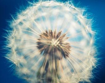 Dandelion Art Photography, blue bath decor, flower art minimal cream neutral bathroom art cottage chic boho art