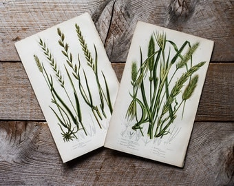 Botanical Prints, Garden Prints, Woodland Plants, 19th Century Chromolithograph Colored Plates, Meadow Grasses, Vintage Lithographs