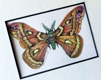 Moth Art Original Drawing, Framed Moth Ink and Watercolor Drawing, Framed Cecropia Moth Art, Original Watercolor Ink Drawing, Framed Art