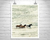 Horse Photography, Horse Print, Horse Art, Wild Horses, Equestrian Art, Prairie Photography, Ranch Art, Equine Art, Horse Picture