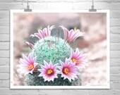 Cactus Print, Arizona Photography, Desert Art, Pastel, Flower, Pink, Spring, Floral, Tucson