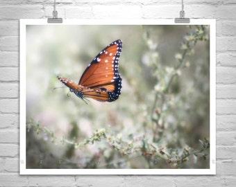 Butterfly Art, Nature Photography, Butterfly Print, Butterfly in Flight, Insect Art, Bug Art, Queen Butterfly, Garden Art, Fine Art Print