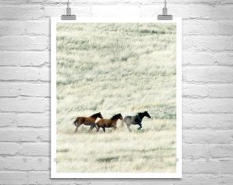 Horse Photography, Horse Print, Horse Art, Equestrian Art, Prairie Photography, Wild Horses, Ranch Art, Equine Art, Horse Picture