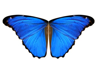 Over 9 Feet Wingspan - Blue Morpho Butterfly Fabric Panel for Large Costume Wings