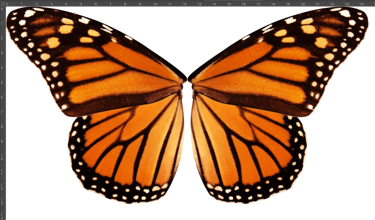 Small Scale Orange Monarch Butterfly Wings Fabric for ...