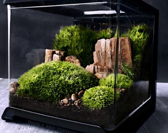 Desktop Terrarium Scene with Live Moss and Petrified Wood for Home Office