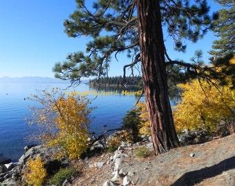 Lake Tahoe Gold