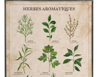 Art Print - Poster - Botanical drawing - Drawing - Herbes aromatiques