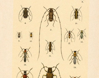 Antique Beetle Prints - Set of Three Prints - 1912 Vintage Prints - Set 2 - Nos. 14, 17, 18
