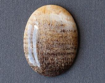 Petrified Wood Stone Cabochon