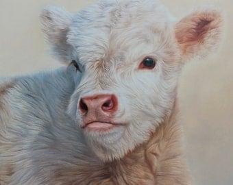 Sam Dolman Highland Cow Animal Limited Edition Print