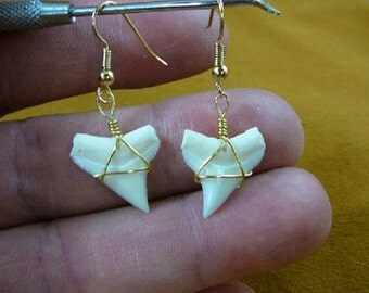 3/4 inch white Modern Oceanic White Tip Shark Upper Tooth Teeth dangle earrings gold wired JEWELRY S814-28