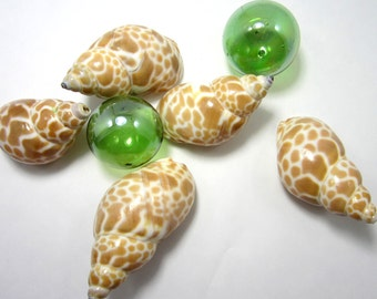 "Beach Decor Nautical Common Babylonia Shells - Nautical Spotted Seashells, 1.5-2"" - 12pc"