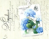 Hydrangea, Gift Tags, Floral Tags, Mophead, Hydrangea Tags, Party Favors