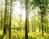"Summer Forest Landscape Photograph, ""Forest Wonderland"" Fine Art Print. Trees Nature Lime Green, Brown. 8x10, 11x14, 16x20, 20x24, 24x30"