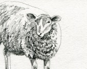 Sheep Original Pencil Sketch - 4 x 6 Art for Sale