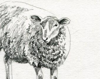 Sheep Original Pencil Sketch - 4 x 6 Art for Sale