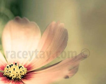 Pastel Decor, Green, Pink, Flower Photography, Shabby Chic Wall Art, Girl Nursery Decor, Pink Flower Photos